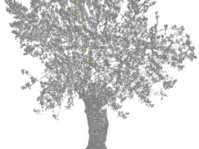 Результаты ночного сканирования дерева
