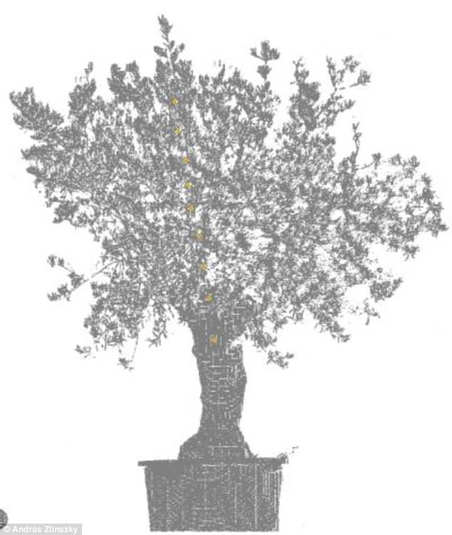 Ученые выявили странные движения деревьев по ночам