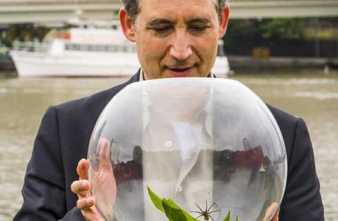 Новых подводных пауков нашли в Австралии