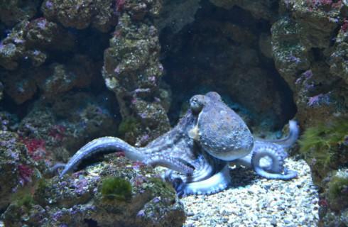 Ученые: осьминоги попали на Землю из космоса
