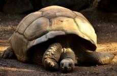 Топ-10 вещей, которые вы не знали о черепахах
