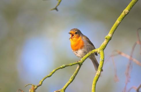 Топ-10 фактов о пении птиц