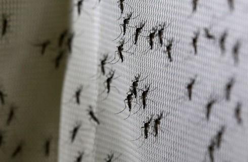 Билл Гейтс победит комаров