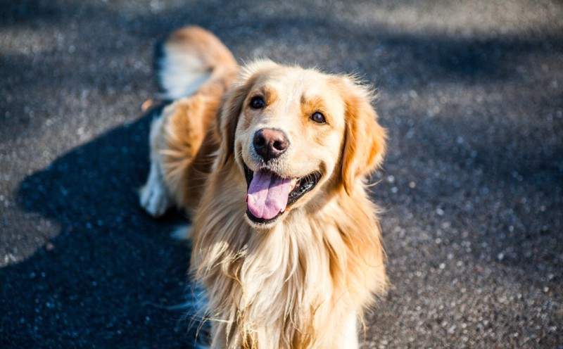 Собаки – настоящие друзья человека, выяснили ученые