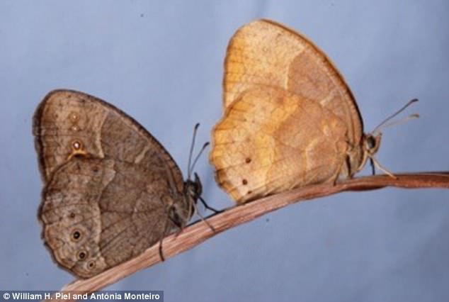 Бабочки открыли новые биоинженерные возможности