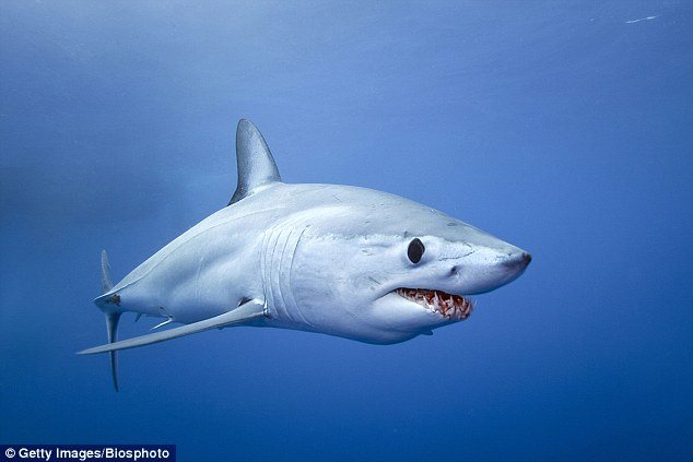 Ребрендинг монстра, или Акулы тоже заслуживают любви, а не страха