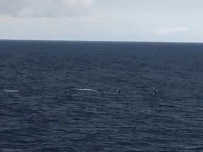 Клюворылые киты