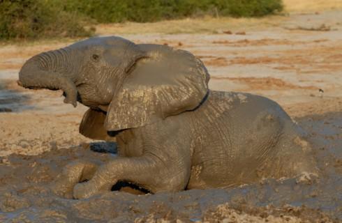 Топ-10 вещей, которые вы могли не знать о грязи