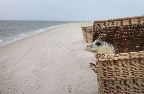 Удивительная история спасения тюленей