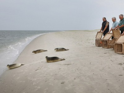 Спасенные тюлени