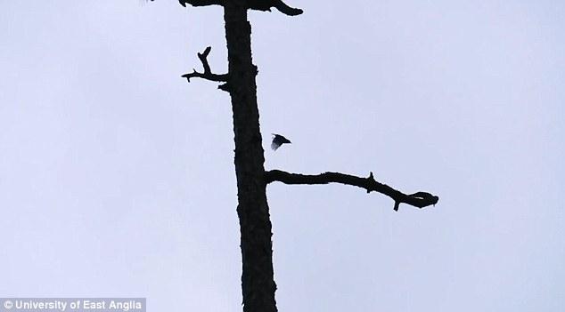 На Багамах нашлись вымершие птицы