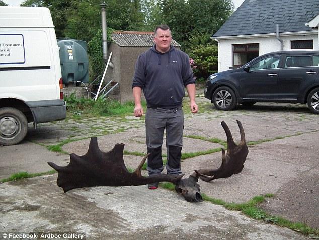 Ирландцы обнаружили вымершего ирландского лося