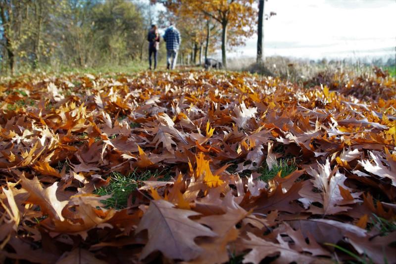 Опавшие листья – актив, а не проблема, или Почему нельзя убирать их осенью