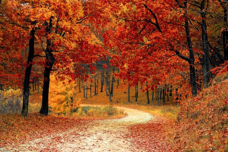 Топ-5 лучших мест, где можно насладиться осенью в парках