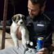 Маленький щенок Барри спас солдата от войны