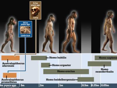 Место Маленькой ноги среди предков человека