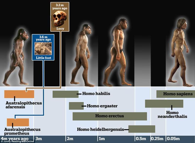 Ученые нашли нового предка человека