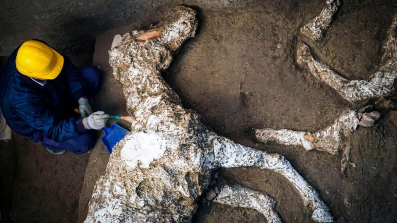 Как лошади пережили взрыв Везувия