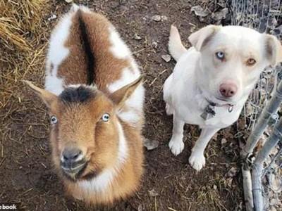 Новые друзья пса Бо