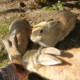 Топ-10 островов с очаровательными животными, которые стоит посетить